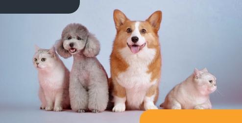 seguro mascotas gomez seguros